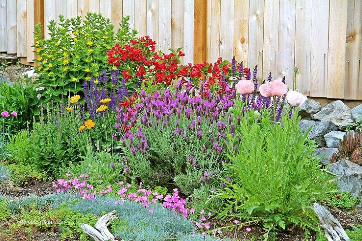 Landscaping With Perennials : Re landscaping to shrubs and perennials