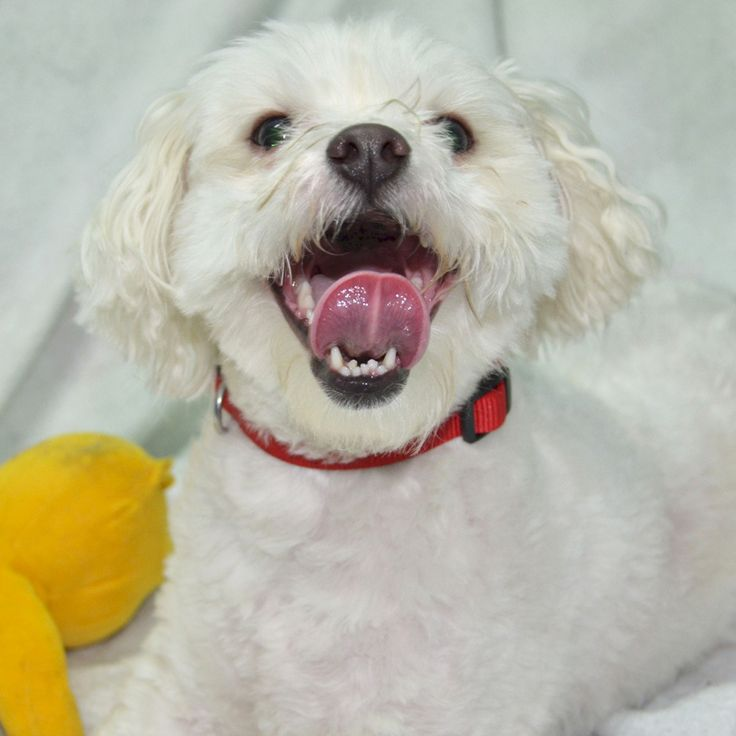 Buster's happy smile is totally contagious! Who could resist that face? Click for Buster's adoption profile