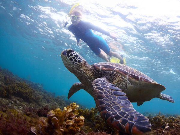 Snorkel with sea turtles.