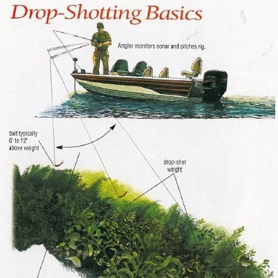 Drop shot bass fishing pinterest for Drop shot fishing