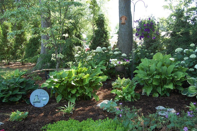 Shade Garden Ideas Canning Gardening Pinterest