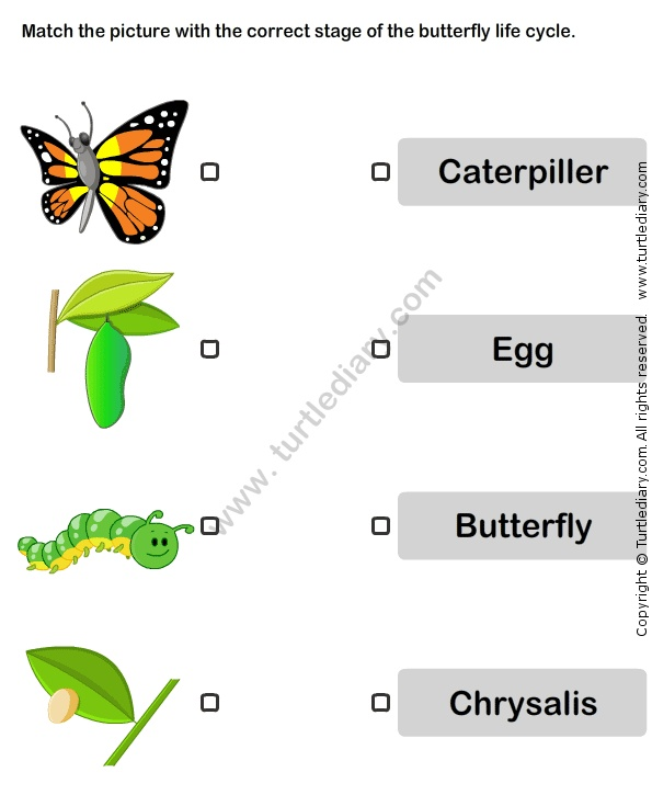 Life cycle of butterfly worksheet - photo#2
