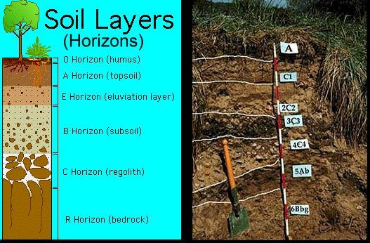 Soil horizon science fair project pinterest for What is found in soil