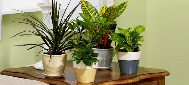 Low maintenance house plants interiors pinterest for Low maintenance indoor flowers