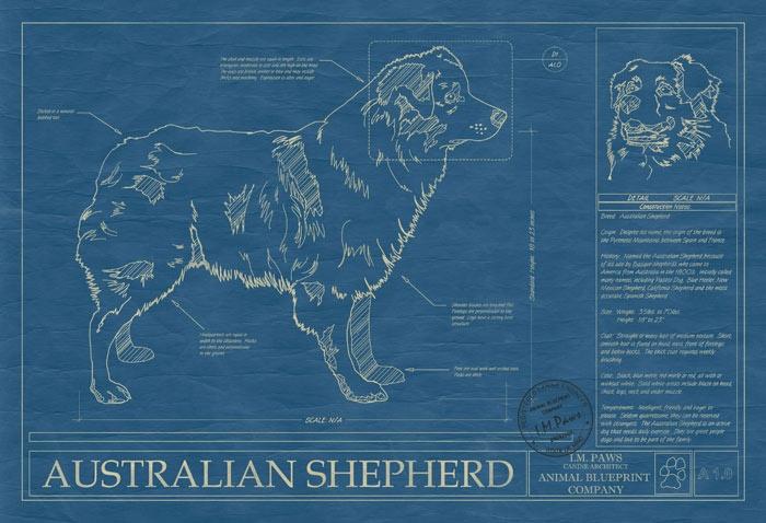 Australian Shepherds And Cats Australian Shepherd Tips | Dog Breeds ...