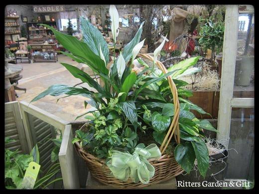 Dish garden our floral designs pinterest for Dish garden designs