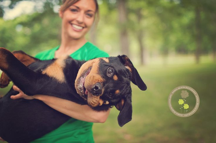 "http://learnshootinspire.com/ ""one a day"" winner by Andrea Martin Photography on Facebook! #dog #pet #photography"