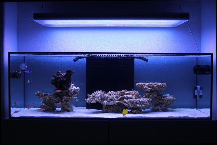 Minimalist Aquascaping aquarium wants Pinterest