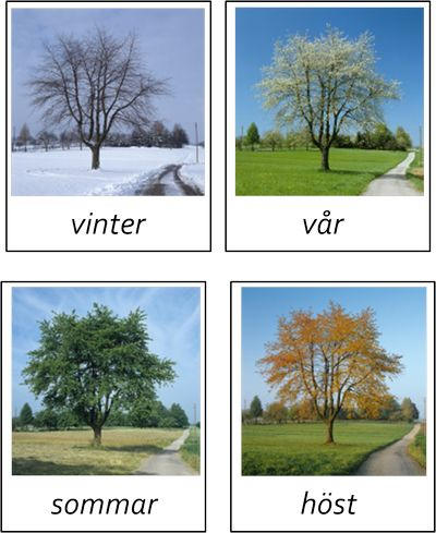 Olika träd