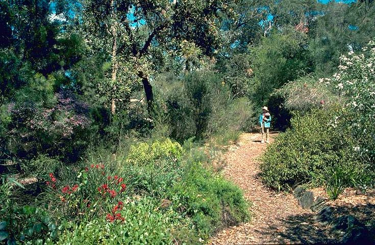 Australian Native Garden Gardening Pinterest