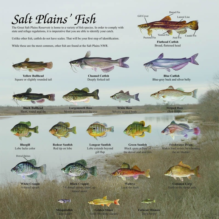 List of fish oklahoma fish list fishing fools pinterest for 7 fishes list