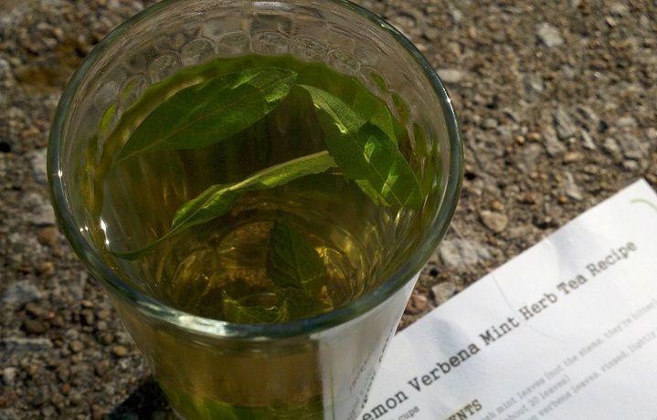 Lemon Verbena Mint Herb Tea 1/2 cup of fresh mint leaves, rinsed, de ...