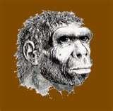 06 - Hace 750 mil años, habita el Pitecántropo (hombre-mono), mide ya 1.65 centímetros y su volumen cerebral es de 950 centímetros cúbicos.