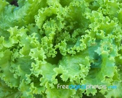 Green Salad Lettuce | Food Photos | Pinterest