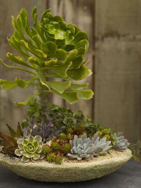 Succulent arrangement succulents pinterest for Garden arrangement of plants