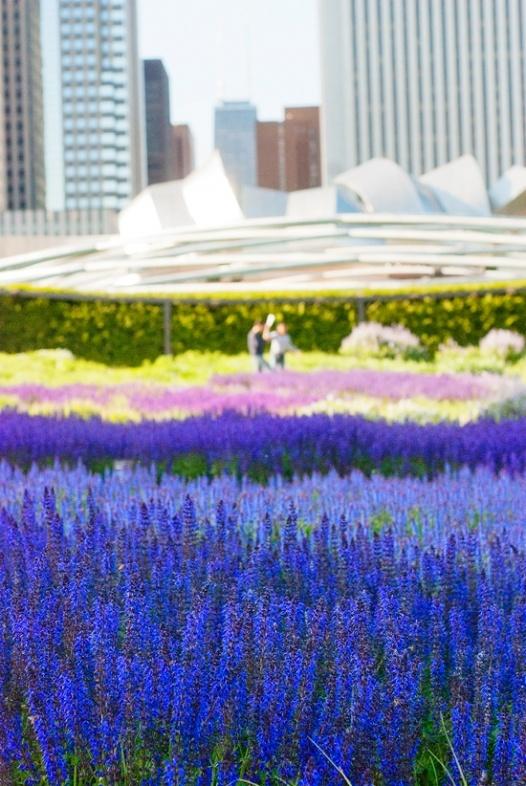 Lurie Gardens - Chicago