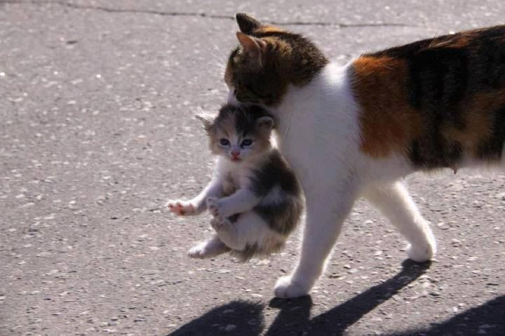 Why Do Cats Leave Their Kittens