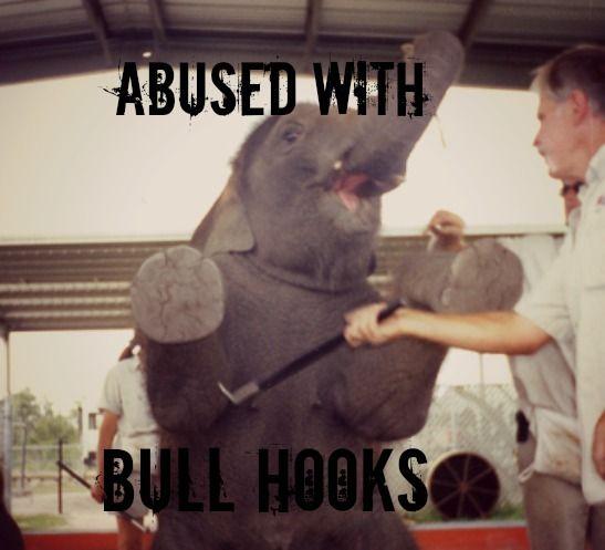 Circus animal abuse articles - photo#18