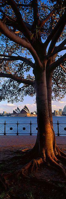 Sydney Harbour!