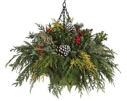 Hanging Flower Baskets Winter : Winter hanging baskets chistmas