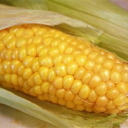 Microwave corn on the cob cooking ideas pinterest