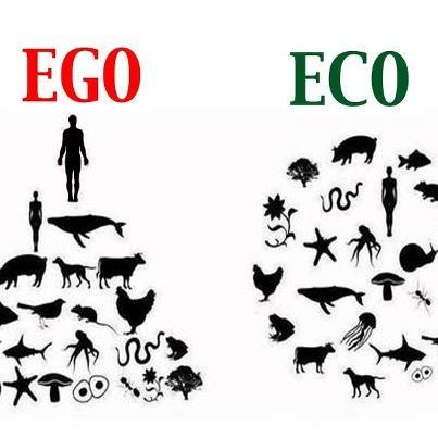 Ego Eco Oxifresh Pictures Pinterest
