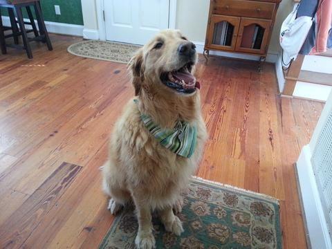 Lady Knotted By Dog   Followclub