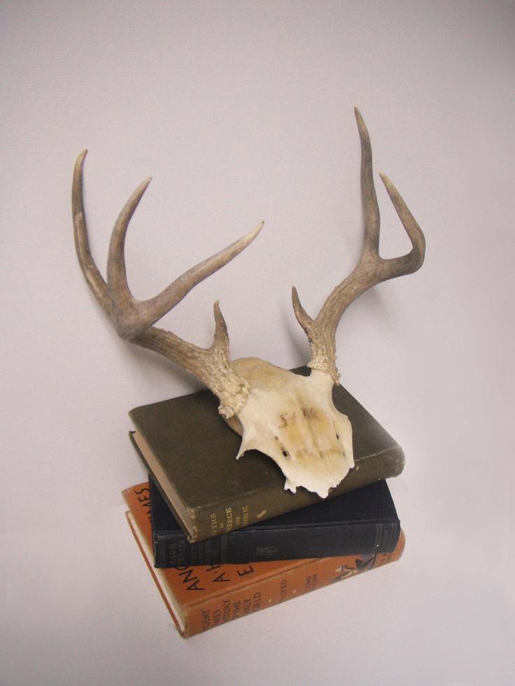 Vintage 7 point deer antler skull wall decor for Antler decorations for home