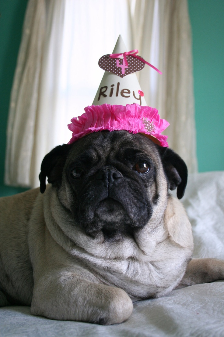Dog Birthday Hat - Girl  I had one done for my dog's birthday and it was adorable! (you can see it in my profile picture)