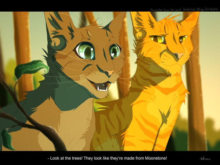Cinderpaw   pelt  and Fireheart starFireheart And Cinderpaw