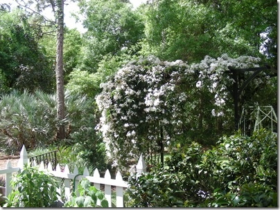 Pin by kelly shoemaker mohr on garden pinterest for Fast growing flowering vines for fences