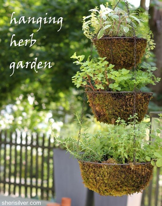 Diy Hanging Herb Garden Gardening Pinterest
