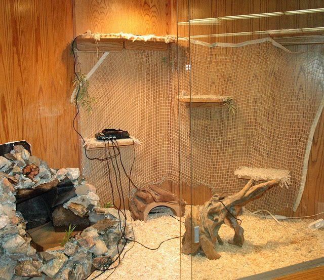 Baby green iguana cage