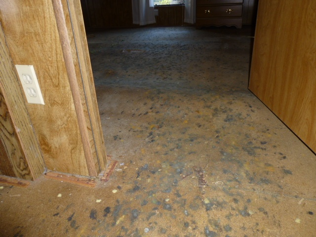 Moldy particle board sub floors building defect
