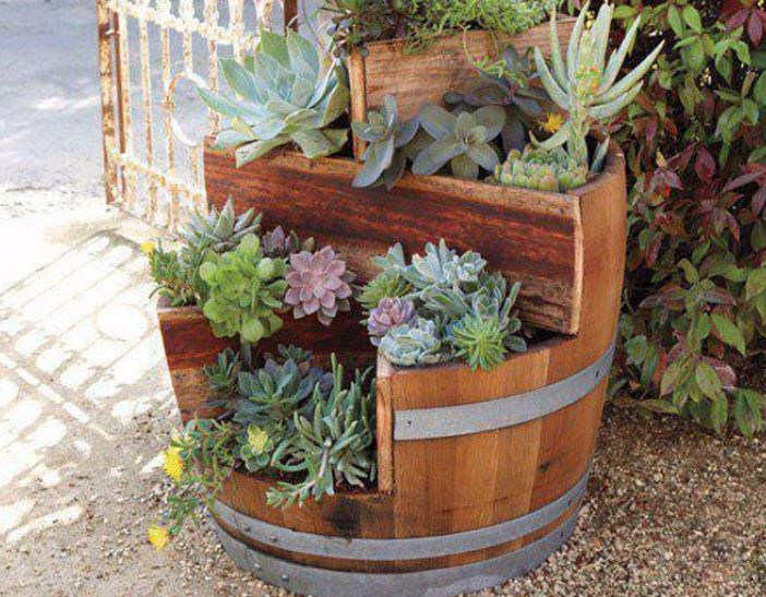 Backyard Vineyard Ideas : backyards
