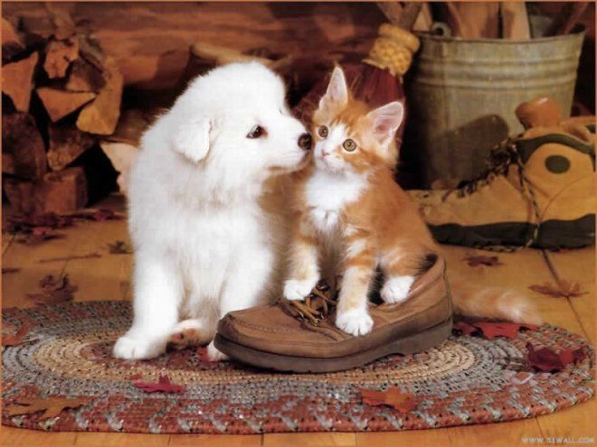 Adorable Kitten and Puppy | ♥ Cute Kittens & Puppies Together ...