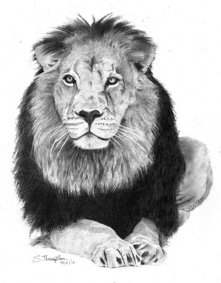 Pencil drawing of a lion | Pencil drawings | Pinterest
