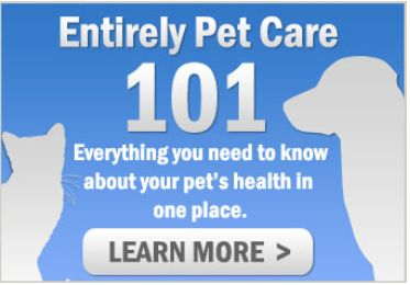 entirely pet care 101 is a pet education center where you
