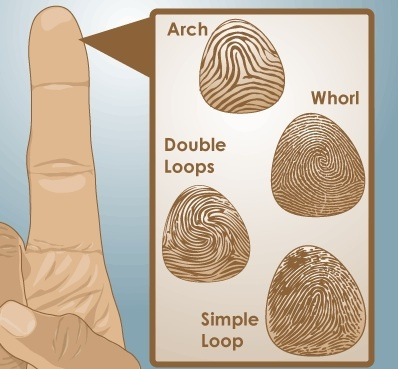 an analysis of dna finger prints in crimtracs database Your genetic blueprint can help solve crimes or cure disease.