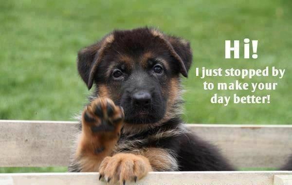 Cheer up | animals | Pinterest