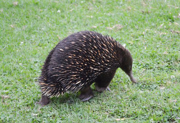Native Australian Wild...