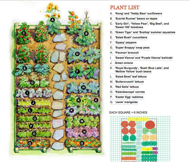 Vegetable garden plan for the home pinterest for Planning your vegetable garden