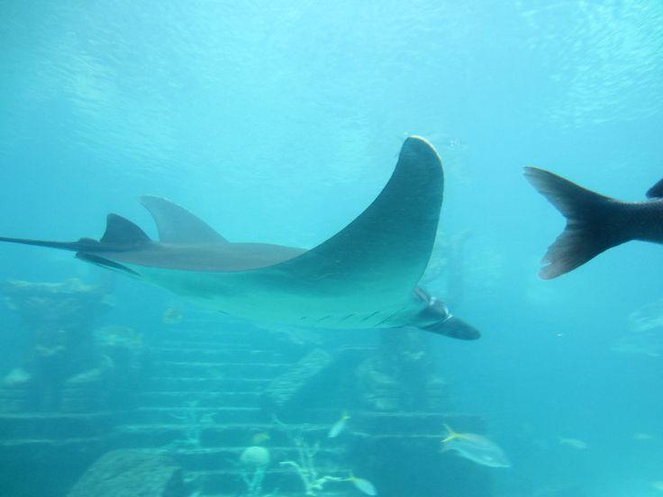 The-Dig-Atlantis-Resort-Paradise-Island-Bahamas