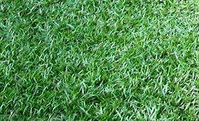 Zoysia grass shade tolerant parent 39 s house pinterest - Drought tolerant grass varieties ...