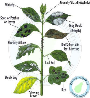 Diseases of Plant Leaves Illustration