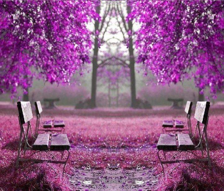 Purple Benches Color Me Purple Pinterest