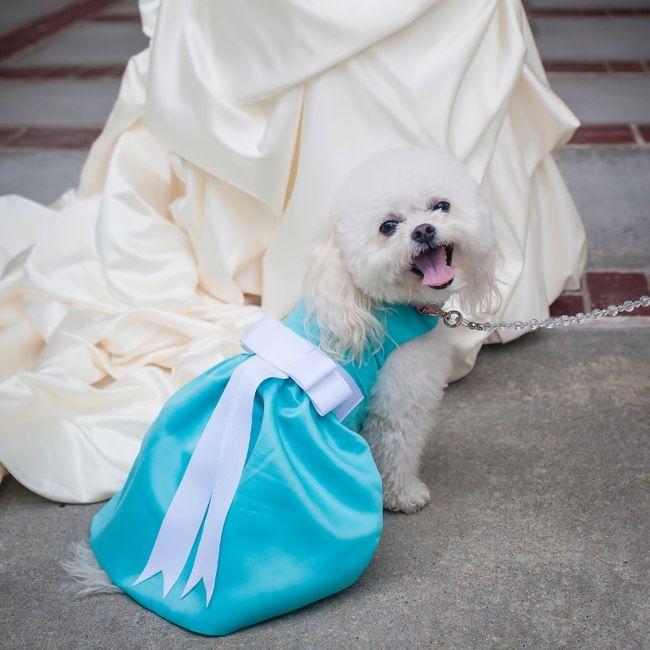 Tiffany Blue Dress for Wedding Dog // photo: Janet Howard Studio