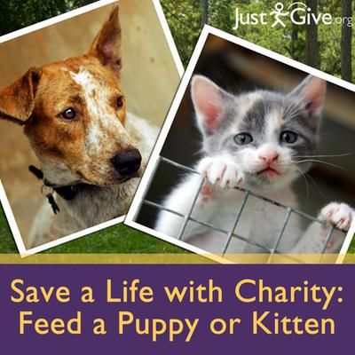 Unique Charitable Gift for Animal Lovers, $20 - Give the gift of love ...