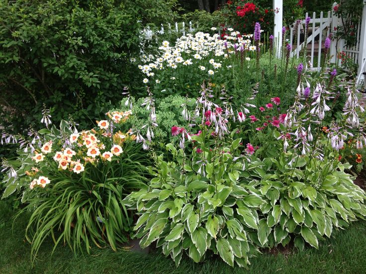 Perennial garden landscape ideas pinterest for Perennial landscaping ideas