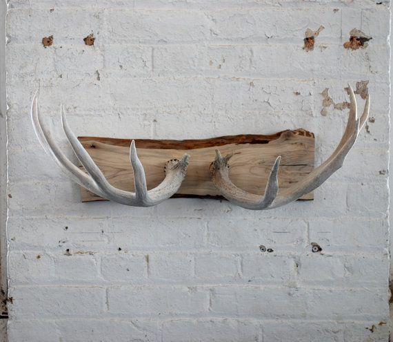 Naturally shed deer antler coat rack/jewelry holder/wall decoration.